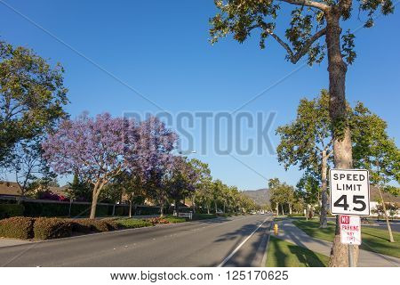Adolfo Street with Purple Blue Jacaranda, Camarillo, Ventura county, CA