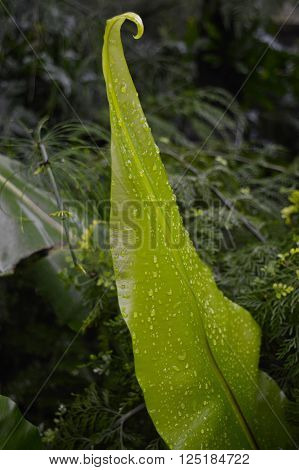 Water drops on a green fern frond