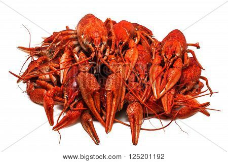 Fresh juicy boiled crawfish closeup isolated on white background. seafood healthy food.