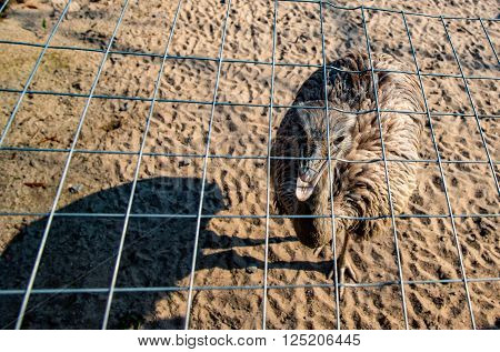 Portrait of an Emu in Germany in early spring