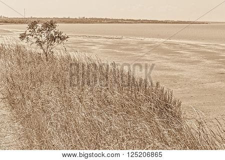 Gently sloping shore of the sea bay is overgrown with wild herbs sepia