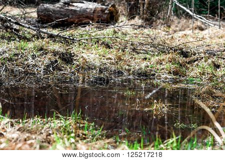 Melt Water In The Forest