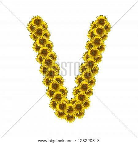Sunflower alphabet isolated on white background letter V