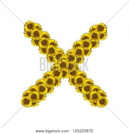 Sunflower alphabet isolated on white background letter X
