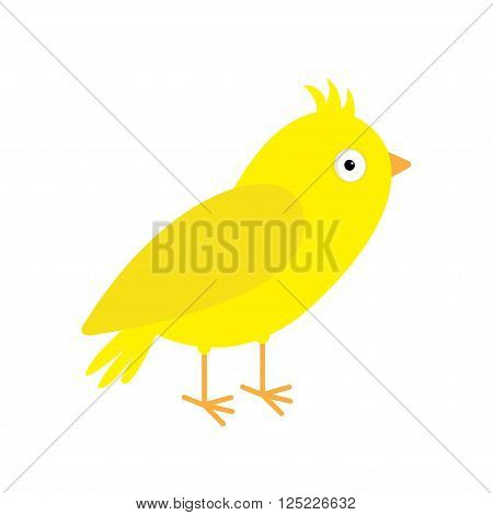 Canary bird. Yellow feather. Isolated White background. Flat design style. Vector illustration