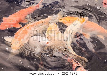 Photo Picture of Carp Fish Texture Background Pattern