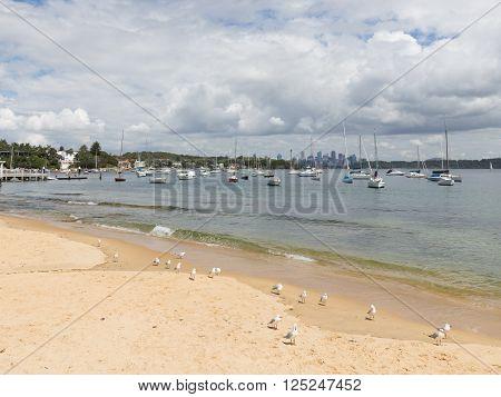 Sydney - March 1 2016: seagulls on the beach yachts and Sydney skyscrapers March 1 2016 Sydney Australia
