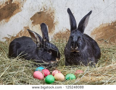 On agriculture background bunnies near Easter eggs lie