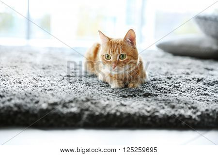 Red cat on the floor, close up