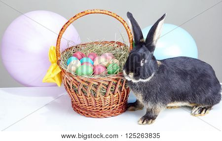 Beautiful bunny near Easter basket decorated with balloons