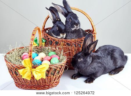 Three rabbit sitting next to Easter basket with eggs