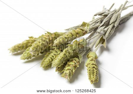Several herbs stems of a mountain tea Sideritis Scardica isolated on white background. The herb is called The Green Hero of the Planet.