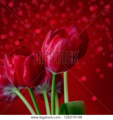 red flower tulips on red background .