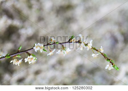 ackground with flowers on a spring day