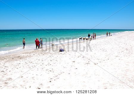 HILLARYS,WA,AUSTRALIA-JANUARY 22,2016: Owners and their pets on the animal exercise beach with the Indian Ocean waters in Hillarys, Western Australia.