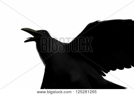 3D rendering of a black raven isolated on white background