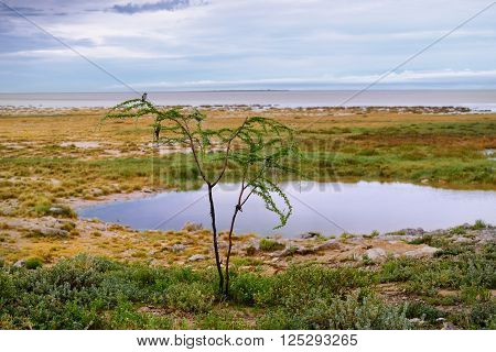 African morning. Small tree with bird at the branches on foreground and waterhole against the Etosha pan with hazy sunrise sky above. Namibia. Focus on the foreground