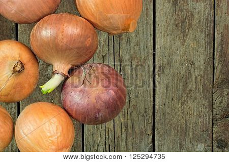 Unpeeled onions on a rough wooden background with copyspace. Top view. Close-up image.