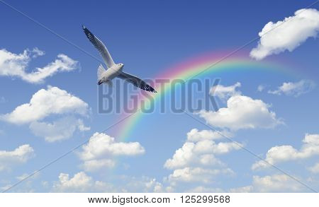 Seagull flying over rainbow with white clouds and blue sky Freedom concept