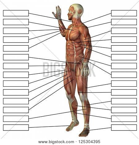 concept or conceptual 3D male or human anatomy, a man with muscles and textbox isolated on white background