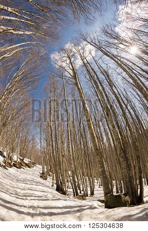 Trail In Beech Tree Woodland With Snow, Fisheye