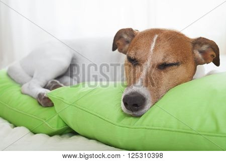 Dog In Bed Sleeping