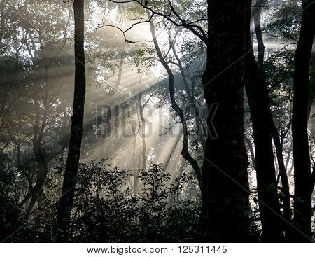 Sunrays passing through trees in Chitwan jungle, Nepal
