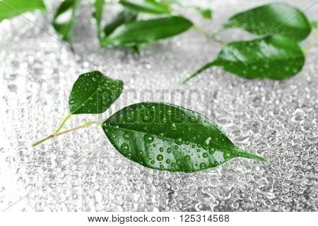 Rubber plant on wet surface
