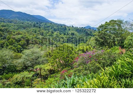 A tropical rainforest in Costa Rica at La Paz Waterfall Gardens
