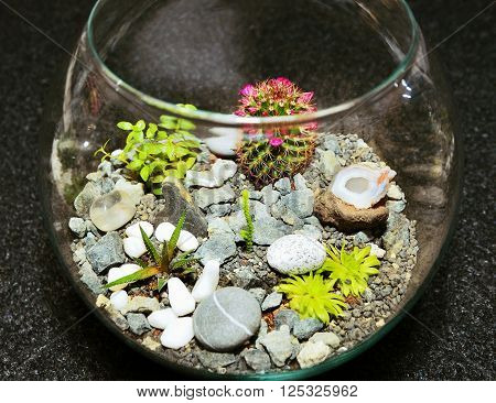 Table Top Plant Decorative Garden