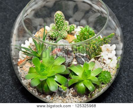 Table top indoor decorative miniature garden in clear glass bubble with cactuses and succulents. Decorative glass vase with succulent and cactus plants. Glass interior terrarium with succulents and cactuses. Top view.