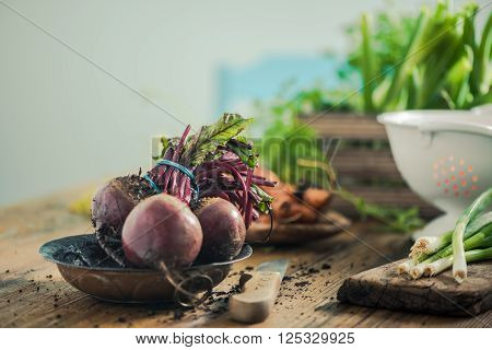 Fresh Whole Beetroot From Garden Soil