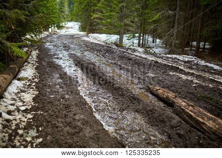 Muddy Road In The Forest