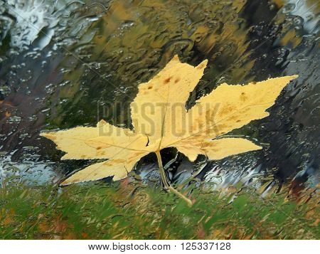 A yellow leaf is stuck to a car windshield made translucent by the rain.