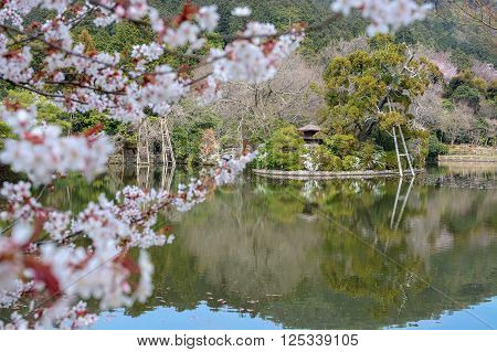 Zen pond garden and cherry tree at Ryoan-ji in Kyoto, focus is on the background