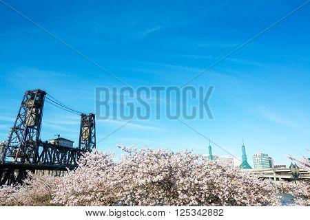 Steel Bridge And Cherry Blossoms