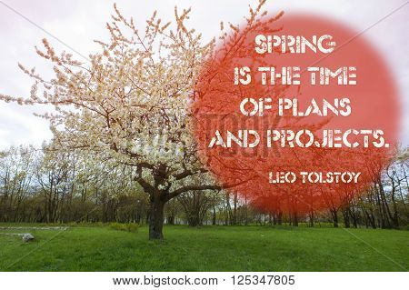Spring is the time of plans and projects quote with scenic blossom cherry tree by springtime