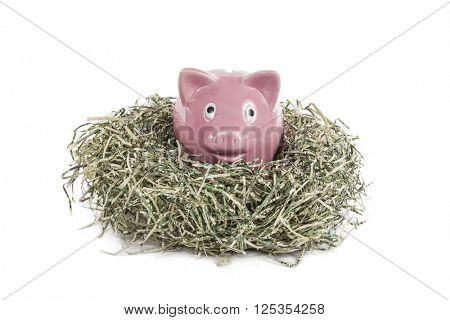 Vintage piggy bank relaxing in shredded US dollar nest.