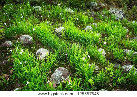 the ground with grass and stone Nature