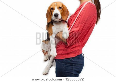Teen girl holding her pet (beagle dog)
