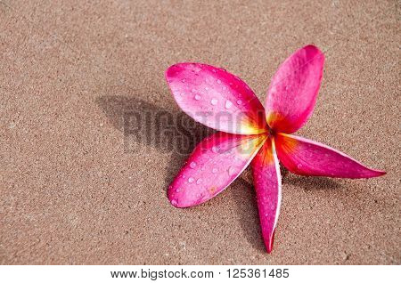 Beautiful red Frangipani flowers on floor, Thailand