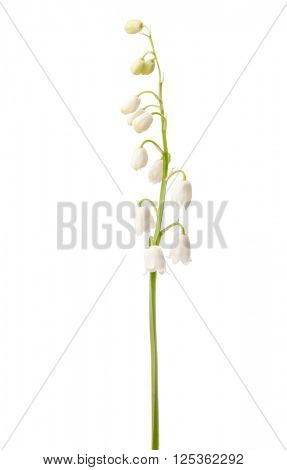 Lily of the Valley isolated on white.