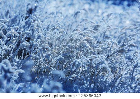 Frozen grass in the mountain