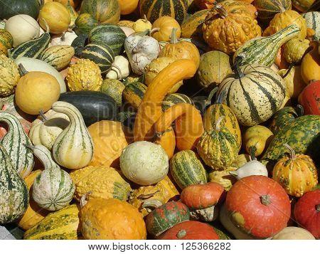Orange yellow green and striped pumpkins, small squash