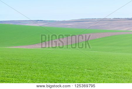 plowed terrain and green field where is cultivated cereals