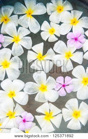 White and pink frangipani floating in the water Bali Indonesia