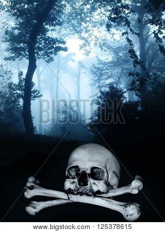 Dark series. Skull and bones in the dark foggy forest
