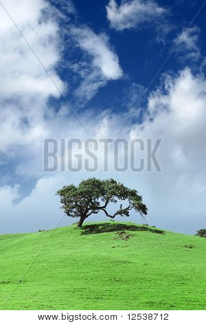 Tree on green hill