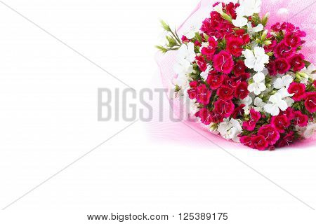 Bouquet of Carnation (Dianthus chinensis) flowers closeup white and red isolated on white