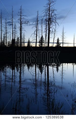 Silhouette reflection in a pond in Yellowstone National Park after sunset.